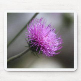 alpine thistle (Carduus defloratus) Mouse Pad