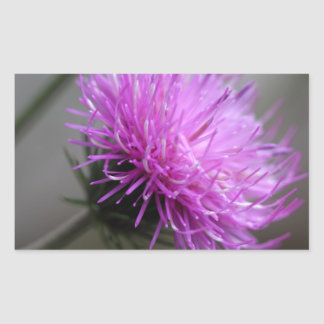 alpine thistle (Carduus defloratus) Rectangular Sticker
