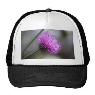 alpine thistle (Carduus defloratus) Trucker Hat