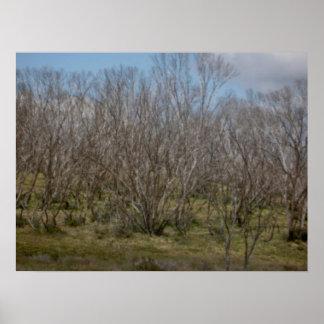 Alpine Trees Pastel Poster