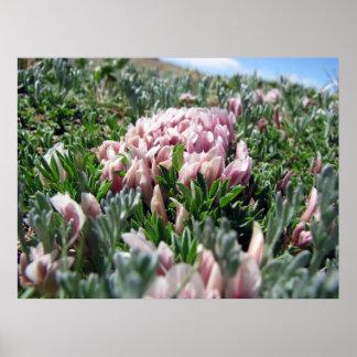 Alpine Tundra Series Poster