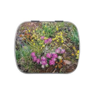 Alpine Wildflower Jelly Belly Tin