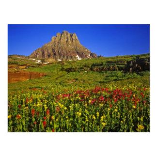 Alpine wildflowers at Logan Pass in Glacier Postcard