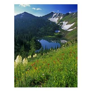 Alpine Wildflowers in the Jewel Basin in the Postcard
