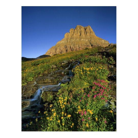 Alpine wildflowers & Mt Clements at Logan Pass Postcard