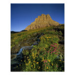 Alpine wildflowers & Mt Clements at Logan Pass Poster