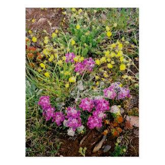 Alpine Wildflowers Postcard