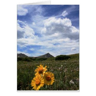 Alpine wildflowers, Rocky Mountains Card