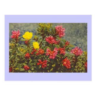 alpinerose postcard