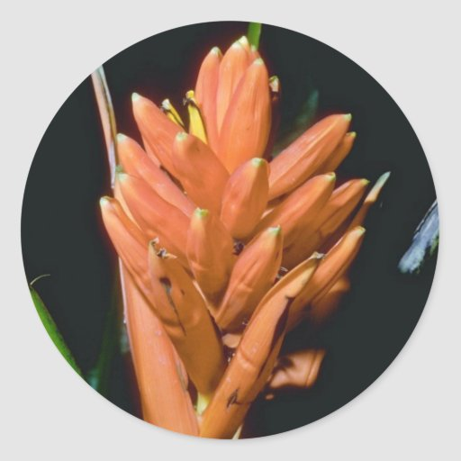Alpinia anaranjado spp. flores pegatina redonda