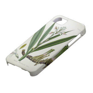 Alpinia officinarum iPhone 5 funda