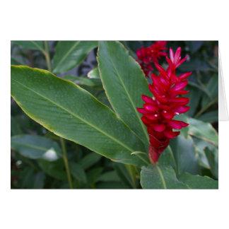 Alpinia Purpurata, Bucerias, México Tarjeta De Felicitación