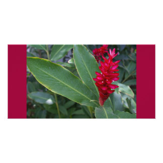 Alpinia Purpurata Deep Pink Tropical Flower Card