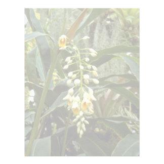 Alpinia Speciosa (Shell Flower) flowers Letterhead