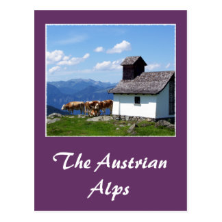 Alps Mountain Scene with Alpine Cows Postcard