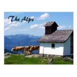 Alps Mountain Scene with Alpine Cows Postcard