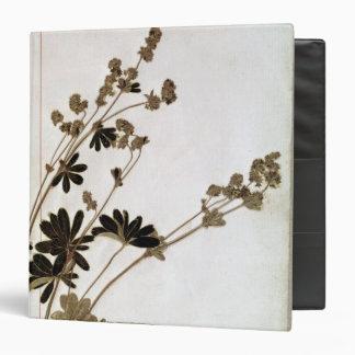 "Alquimila, de un herbario carpeta 1 1/2"""