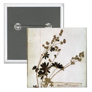 Alquimila, de un herbario pin cuadrado