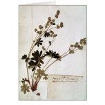 Alquimila, de un herbario tarjeta de felicitación
