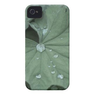 alquimila Case-Mate iPhone 4 protectores
