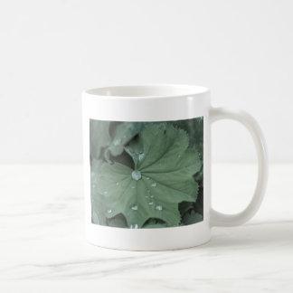 alquimila taza de café