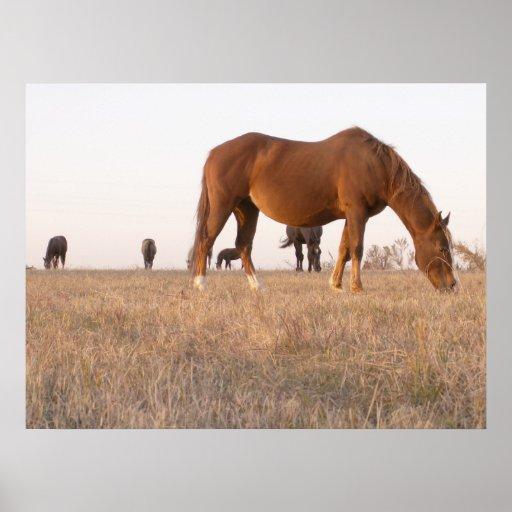 Alrededor salvaje vivo y el horsing póster