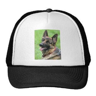 Alsatian Dog Hat/Cap