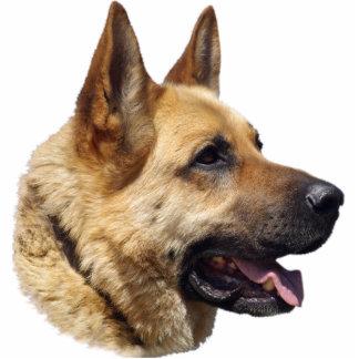 Alsatian German shepherd portrait Photo Sculpture