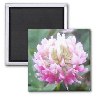 Alsike Clover Blossom 1 Magnet