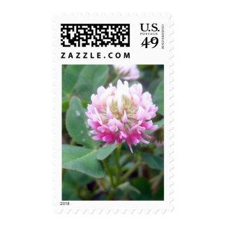 Alsike Clover Blossom 1 Stamp