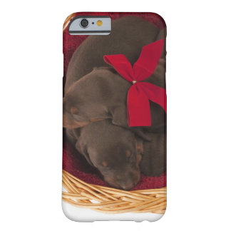 Also Doberman Pincher. Medium-sized domestic dog Barely There iPhone 6 Case