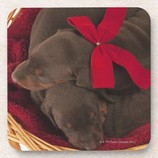 Also Doberman Pincher. Medium-sized domestic dog Coaster