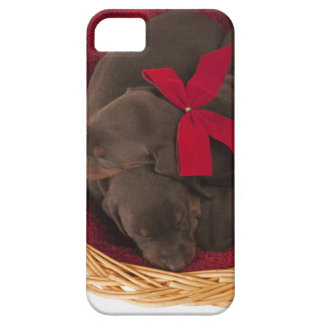 Also Doberman Pincher. Medium-sized domestic dog iPhone 5 Cover