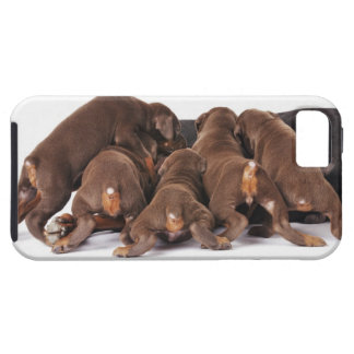 Also Doberman Pincher. Medium-sized domestic dog iPhone SE/5/5s Case