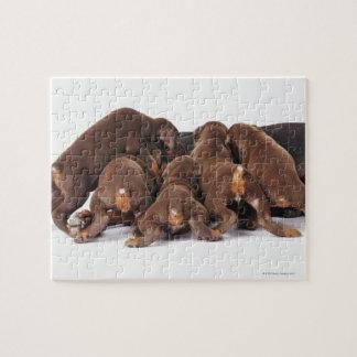 Also Doberman Pincher. Medium-sized domestic dog Jigsaw Puzzle