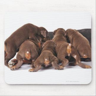 Also Doberman Pincher. Medium-sized domestic dog Mouse Pad