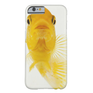 Also known as Comet-tailed goldfish. Hardy Barely There iPhone 6 Case