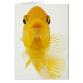 Also known as Comet-tailed goldfish. Hardy Greeting Card