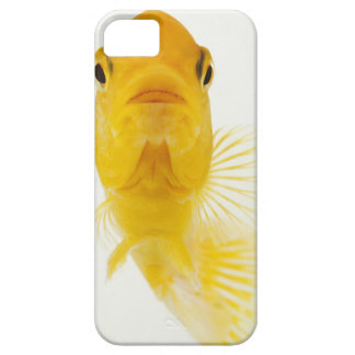 Also known as Comet-tailed goldfish. Hardy iPhone 5 Case