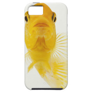 Also known as Comet-tailed goldfish. Hardy iPhone 5 Cover