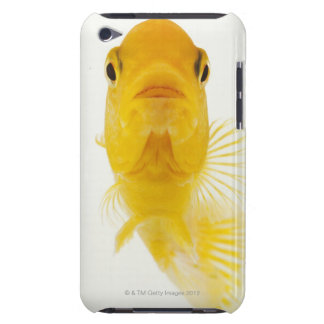 Also known as Comet-tailed goldfish. Hardy Barely There iPod Cases