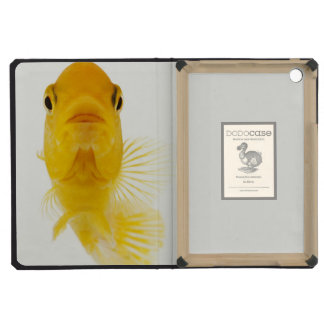 Also known as Comet-tailed goldfish. Hardy iPad Mini Cover