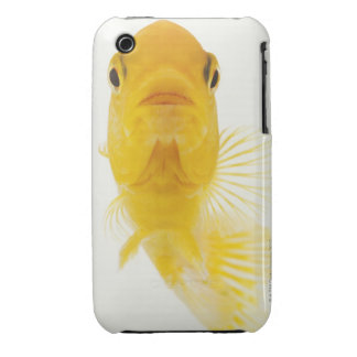 Also known as Comet-tailed goldfish. Hardy iPhone 3 Covers