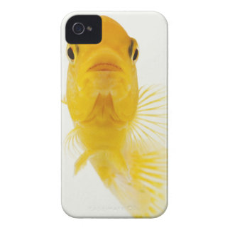 Also known as Comet-tailed goldfish. Hardy iPhone 4 Case