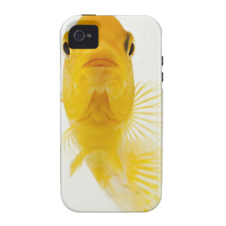 Also known as Comet-tailed goldfish. Hardy iPhone 4 Cover