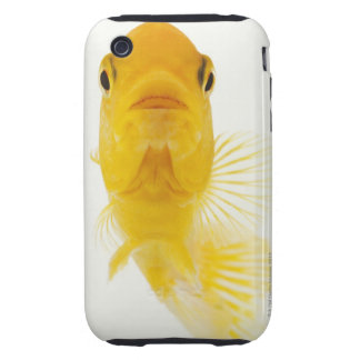 Also known as Comet-tailed goldfish. Hardy iPhone 3 Tough Case