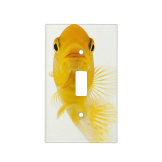 Also known as Comet-tailed goldfish. Hardy Light Switch Plates