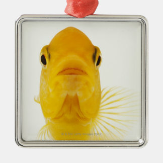 Also known as Comet-tailed goldfish. Hardy Metal Ornament