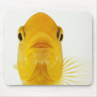 Also known as Comet-tailed goldfish. Hardy Mouse Pad