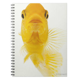 Also known as Comet-tailed goldfish. Hardy Spiral Note Book